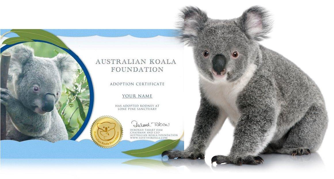 Koala adoption certificate preview
